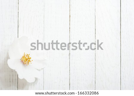 white field rose flower on bright wooden surface - stock photo