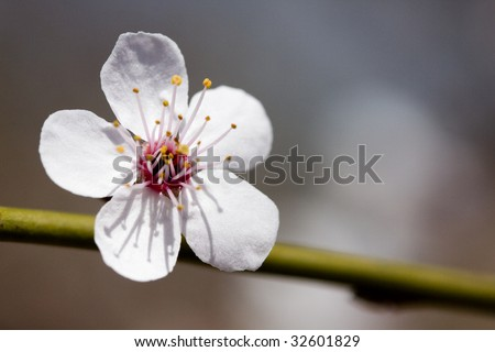 White flower - stock photo