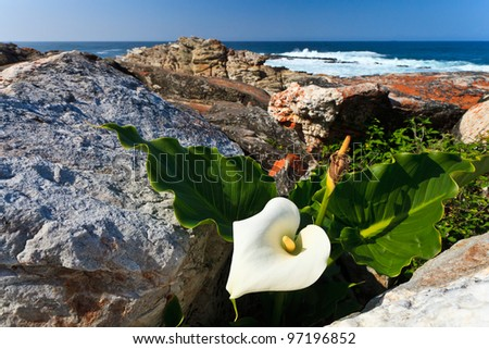 White flower at the coastline with the sea in the background - stock photo