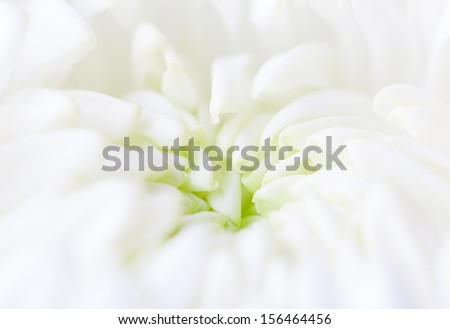 White flower bud  leaves opening - stock photo