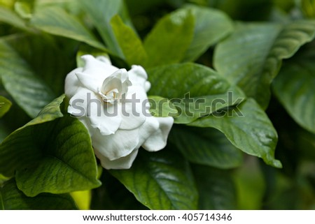 White Flower Green Leaves - stock photo