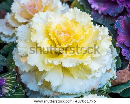 white flower in plot - stock photo