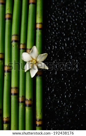 White flower on thin bamboo grove on wet black background