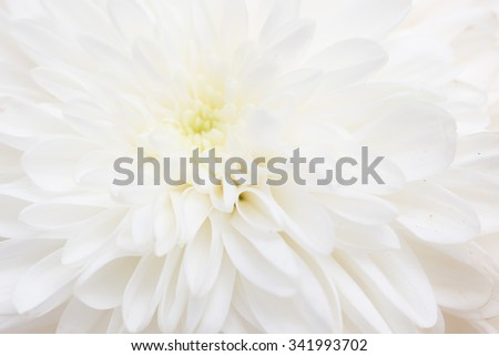 white flower peony as the background