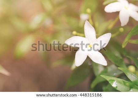 White flower with morning light on natural background, Beautiful small white flower, Water droplets on tiny white flower - stock photo