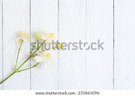 white flowers and buds on wood background - stock photo