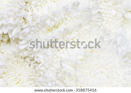 White flowers background - stock photo