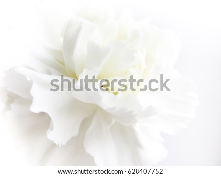 White flowers background macro white petals stock photo royalty white flowers background macro of white petals texture soft dreamy image mightylinksfo