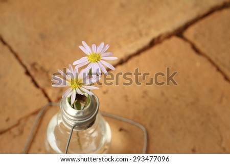White flowers in a vase on a brown background.