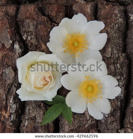 white flowers on a background of wood bark close up
