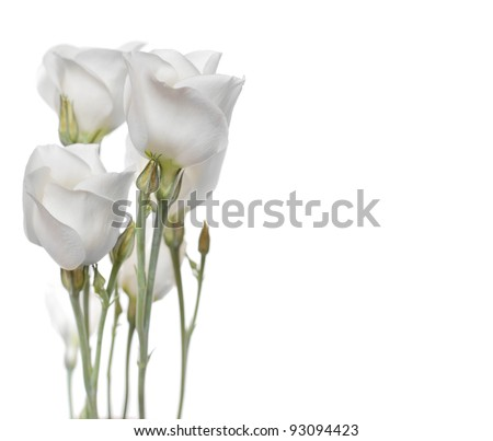 White flowers on white isolated background with copy space(Lisianthus flowers). Could be used also as a weeding invitation! - stock photo