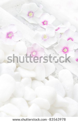 White flowers (Phlox) in water pond. Still life (with diffusion filter). - stock photo