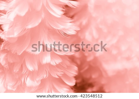White fluffy feather closeup - Fresh Muscle to Unsure Mauve pink and pale Muted Russet design colors  - Fashion Color Trends Fall Winter 2016 2017 Set 2 - Rosy Opalescence of Spring Summer 2017 - stock photo