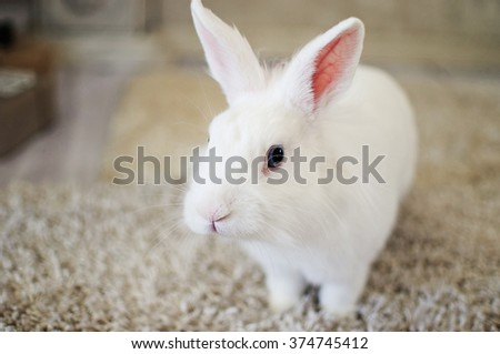 White fluffy rabbit sitting on the carpet - stock photo
