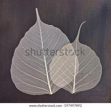 white foliage - stock photo