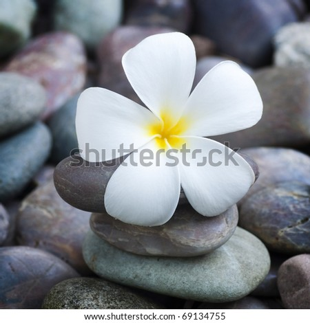 White frangipani and therapy stones