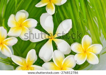 White frangipani with palm leaf on wet - stock photo