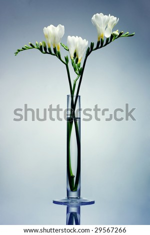 White freesia flowers in a glass vase - stock photo
