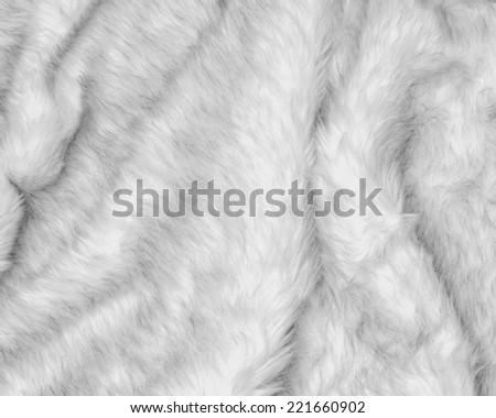 white fur background. - stock photo