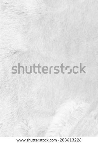 White fur background texture. Closeup - stock photo