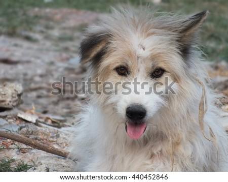 White furry stray dog - stock photo