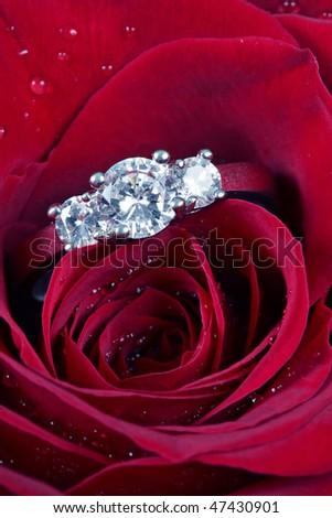 White gold diamond ring in rose - stock photo