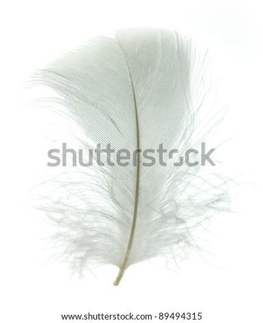White goose feather isolated on white background - stock photo