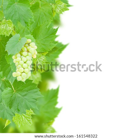 White grapes and leaves border isolated on white background - stock photo