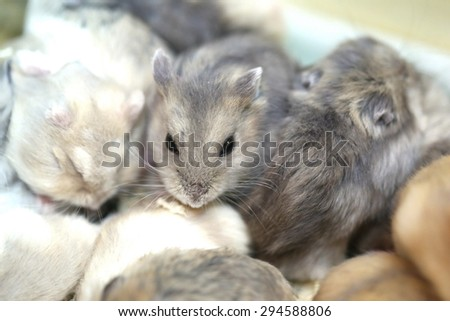 white grey mouse - stock photo