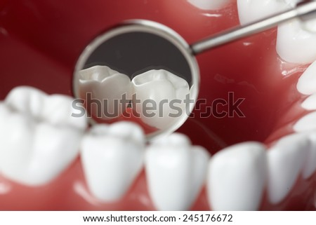 White healthy perfect teeth plastic model. Dental health. - stock photo