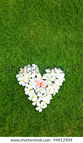 White heart from balinese flowers on green grass - stock photo