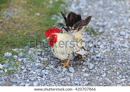 White hen and chickens in nature - stock photo