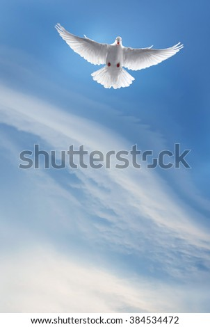 White Holy Dove flying in the sky vertical image - stock photo