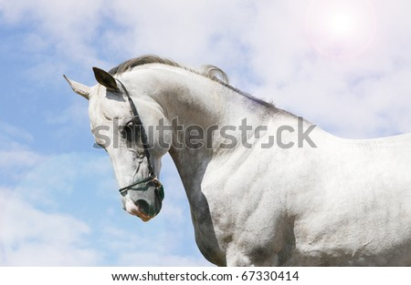 white horse and sky - stock photo
