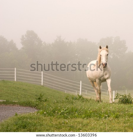 White Horse Coming Out of Mist - stock photo
