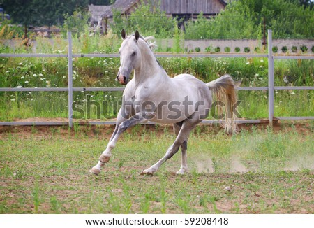 white horse galloping in paddock - stock photo