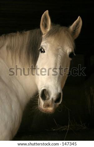 White horse head in black background - stock photo