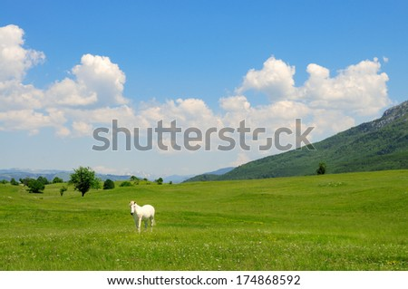 White horse in a meadow  - stock photo