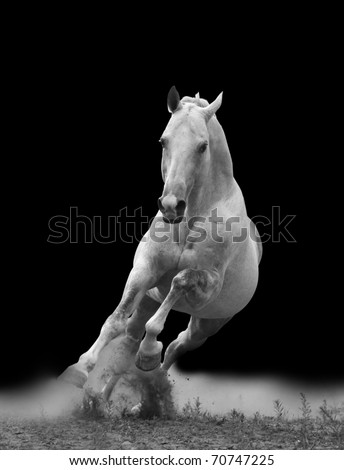 white horse in dust - stock photo