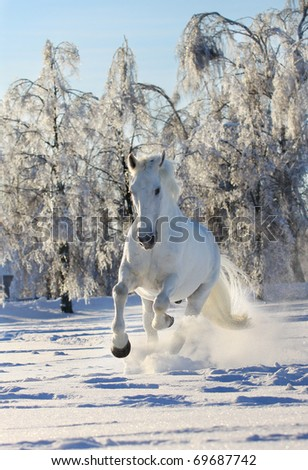 white horse in snow - stock photo