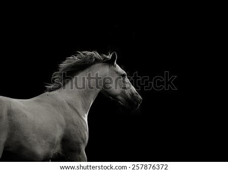 white horse in the dark in movement - stock photo