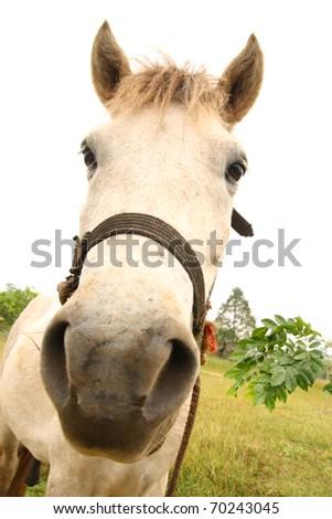 White horse in the farm. - stock photo