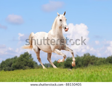 white horse in the field - stock photo