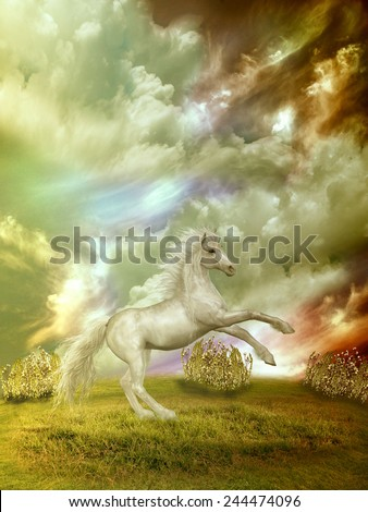 white horse in the field in stormy day - stock photo