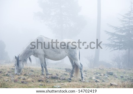 white horse in the mist in the woods