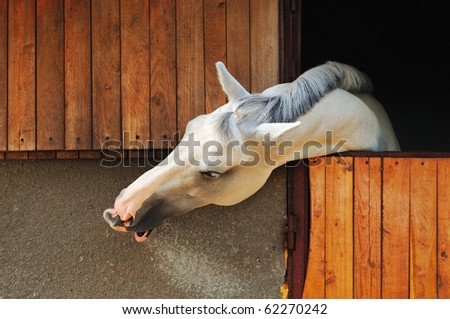White horse in the stable - stock photo
