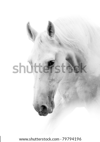 white horse isolated in high key - stock photo