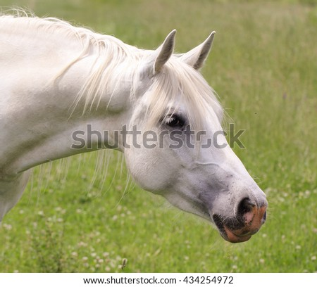 White horse macro close up view