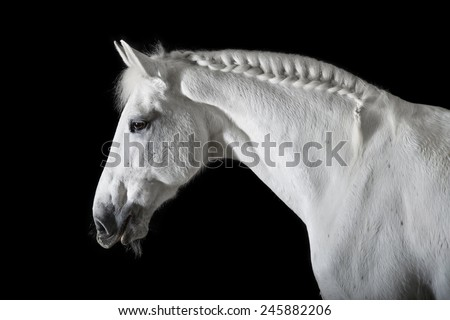 White horse on the black background - stock photo