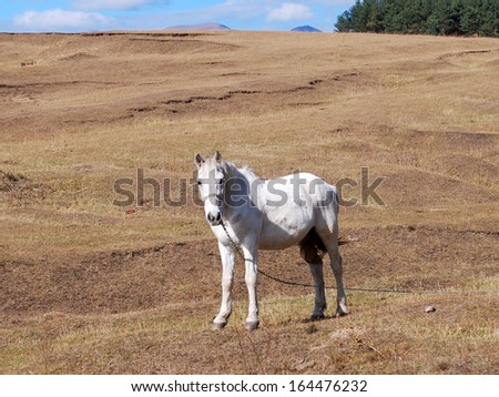white horse on the field